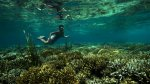 image du programme Raja Ampat, le royaume du corail