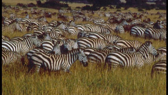 Image du programme chroniques de l'afrique sauvage
