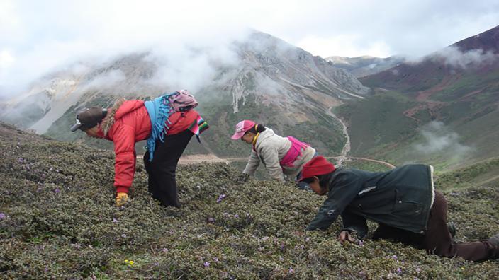 Image du programme L'or brun du Tibet