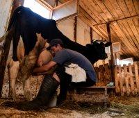 En Russie sous embargo, des produits laitiers... sans lait