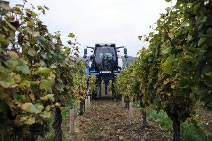 Parkinson liée aux pesticides: les agriculteurs minimisent encore le danger
