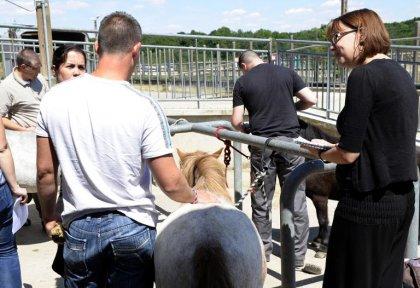 A Metz, des poneys au chevet de militaires traumatisés