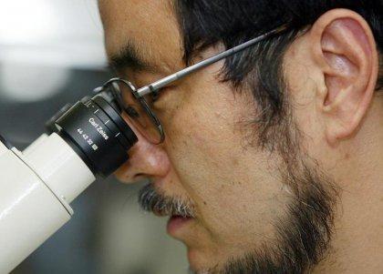 Affaire des cellules STAP: rapport final d'enquête attendu mardi