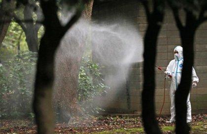 Dengue au Japon: désormais 34 cas autochtones confirmés