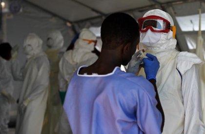 La molécule d'une herbe asiatique arme potentielle contre Ebola