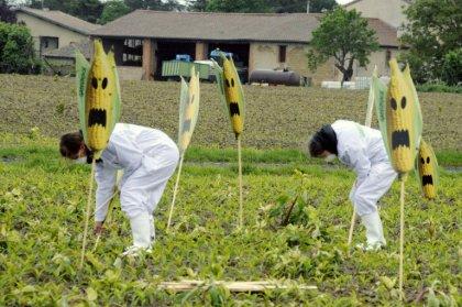 OGM : plus de 100 prix Nobel s'en prennent à Greenpeace dans une lettre ouverte