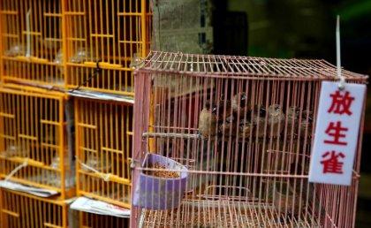 Grippe aviaire: une femme dans un état critique à Hong Kong