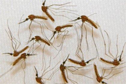 Paludisme: 300 millions de traitements distribués en Afrique par Sanofi