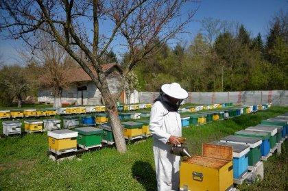 En Roumanie, les abeilles aident les médecins à faire des miracles