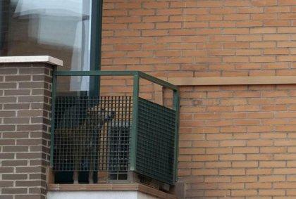 Ebola: Excalibur, le chien d'une malade espagnole, euthanasié