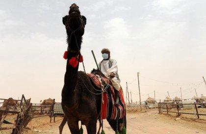 Coronavirus MERS: traces du virus dans l'air d'un abri à chameaux