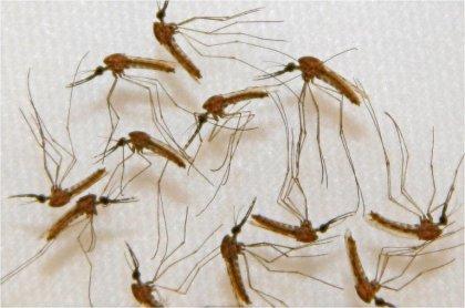 Traquer parasites et virus avec des satellites pour prévoir les épidémies