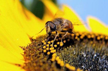 L'allergie aux pollens concernerait jusqu'à 30% des adultes