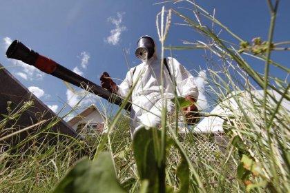 Chikungunya: au moins 35.000 cas et cinq décès en Polynésie