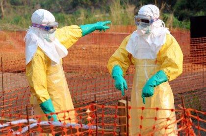 Ebola: des chauve-souris insectivores suspectées d'être à l'origine de l'épidémie