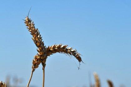Salariés intoxiqués par des pesticides:  Nutréa condamné