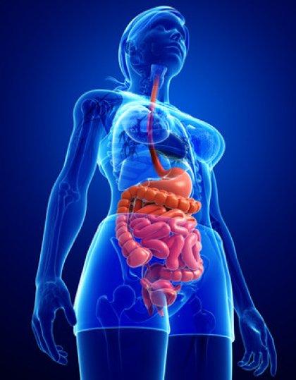Saignement digestif bas