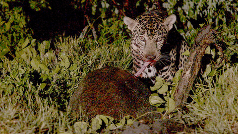 Costa Rica : Le réveil de la nature