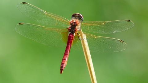 ARTE, Fascinants insectes, 13h15 - 14h00, Documentaire, Accéder à la TV en direct