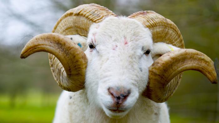 ARTE, La vie cachée des animaux de la ferme, 7h50 - 8h35, Documentaire, Accéder à la TV en direct