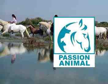 Passion animal
