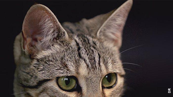 TF1, La vie secrète des chats, 10h35 - 12h00, Documentaire, Accéder à la TV en direct