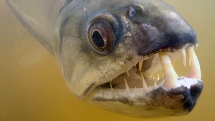 Bêtes de poissons