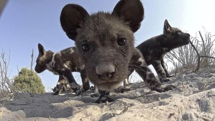 Caméras espions en terre animale