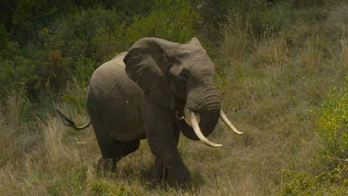 Kenya, chroniques de la vie sauvage