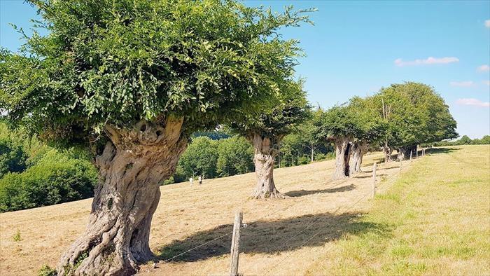 ARTE, Trognes : Les arbres aux mille visages, 11h00 - 11h50, Documentaire, Accéder à la TV en direct