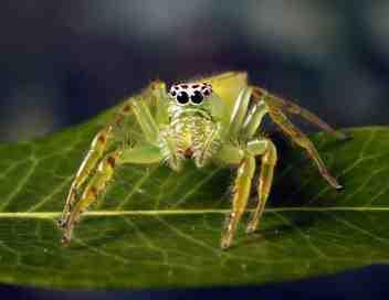 Monster bug wars !