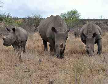Les routes sauvages de l'Afrique