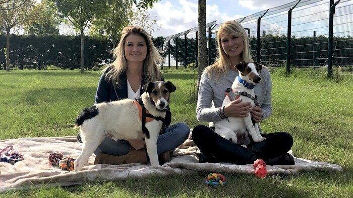 Animaux à adopter : nouvelle famille pour une nouvelle