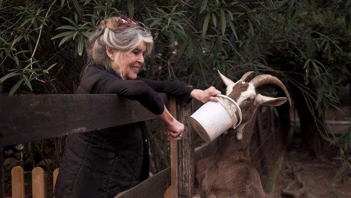 Brigitte Bardot : le serment fait aux animaux