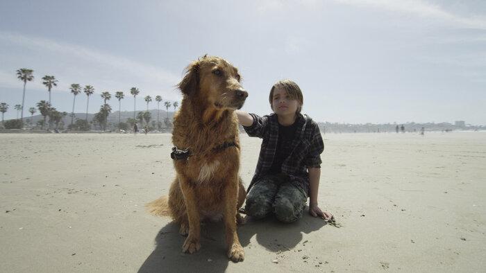 FRANCE 5, Dans la vie d'un chien, 10h50 - 11h45, Documentaire, Accéder à la TV en direct