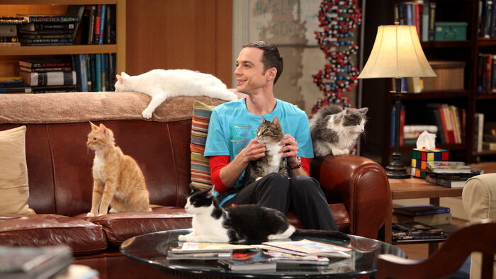 NRJ12, Big Bang Theory, 16h20 - 16h45, S03E22 - Big Bang Theory, Accéder à la TV en direct