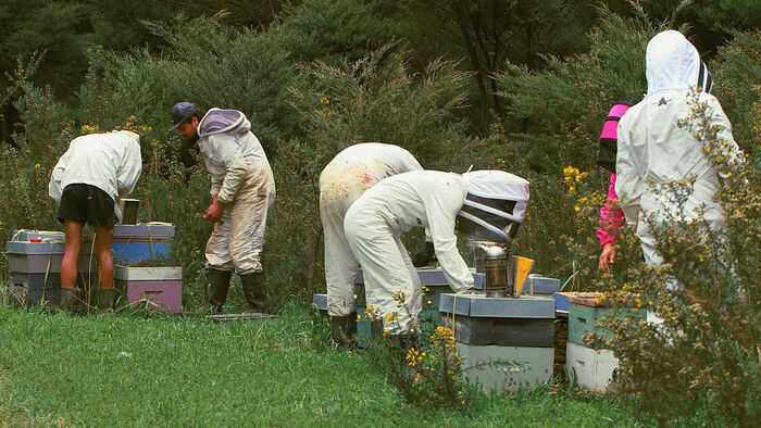 Les maîtres des abeilles