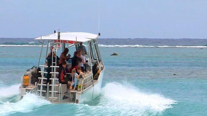 Moorea, l'île aux requins citrons