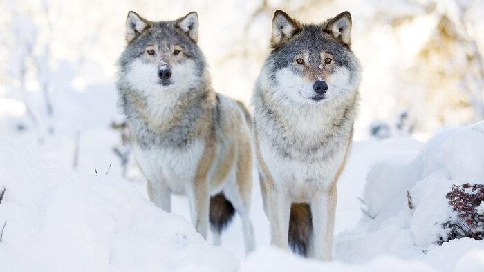 Vétérinaires de l'Arctique