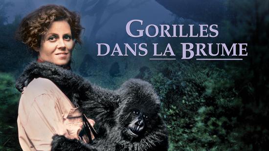 LE GORILLE BRUME FILM TÉLÉCHARGER DANS LA