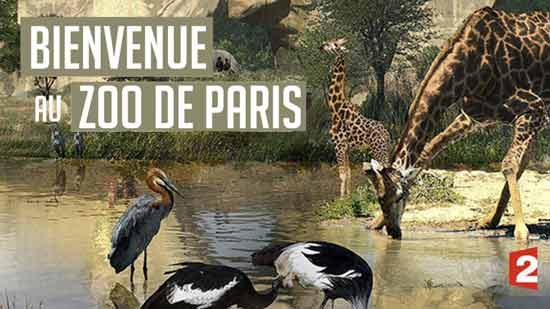 Grandeur nature : Bienvenue au Zoo de Paris