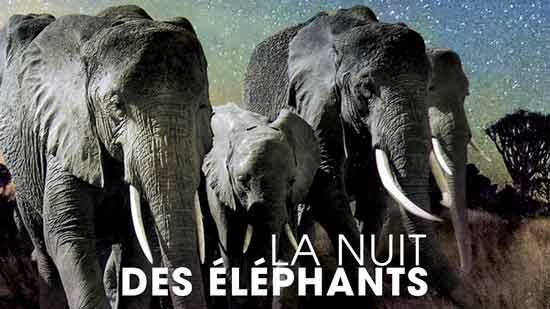 La Nuit des éléphants
