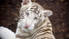 image de la recommandation Zoo nursery