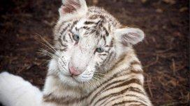 image du programme Zoo nursery