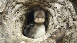 image du programme Animal Homes