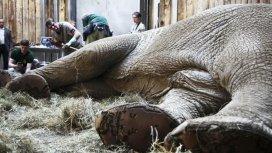 image du programme Les vétérinaires de l'extrême
