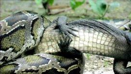 image du programme Crocodile contre serpent : le combat des géants
