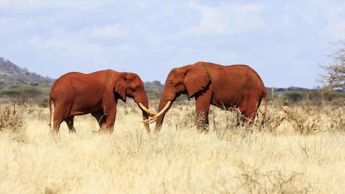 001. Tsavo, la terre des éléphants rouges