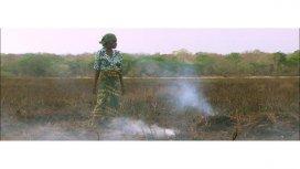 image de la recommandation La biodiversite menacee