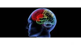 image de la recommandation Voir le cerveau penser